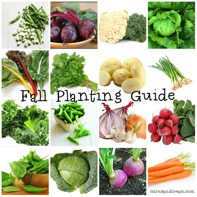 Central Valley Fall Planting Guide