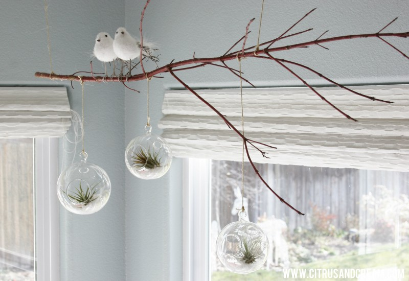 hanging airplant on dogwood branch