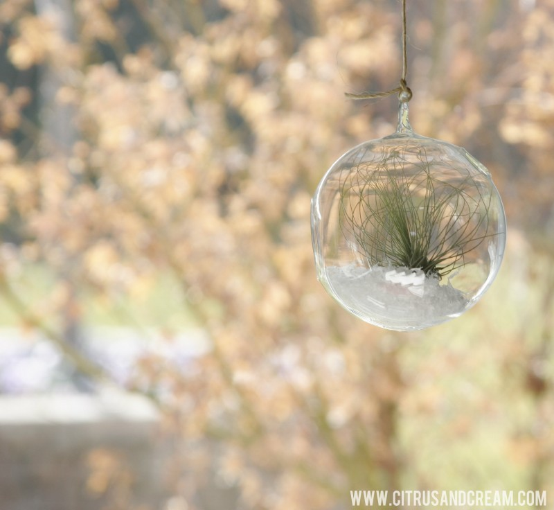 hanging airplant