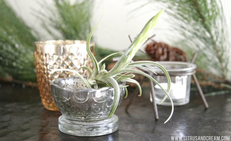vase airplant