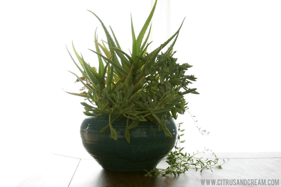Breathe easy 5 simple tips to improve indoor air quality for Indoor plants for better air quality