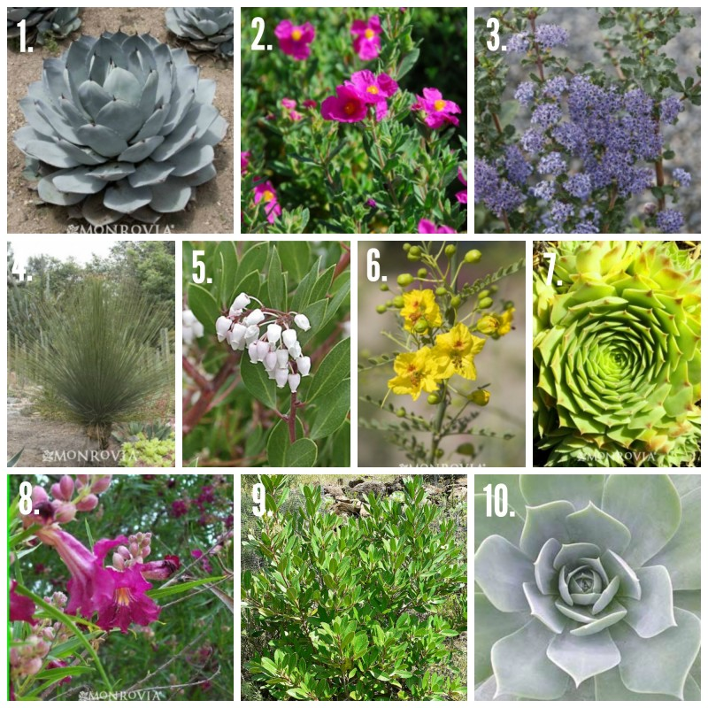 10 Drought Tolerant Plants