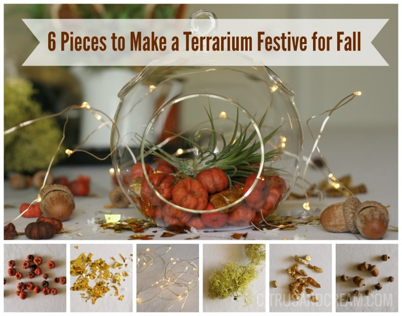 6 Pieces to Make a Terrarium Festive for Fall